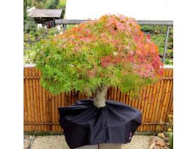 Capa Protetora 78x78 cm O Bonsai